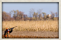 Hunter taking aim at a pheasant in flight